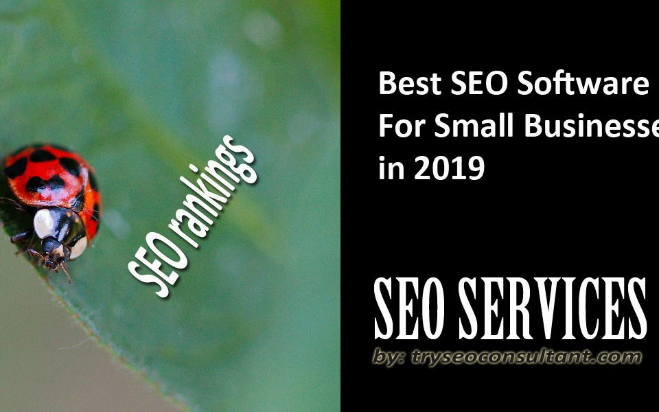 Best SEO software for small business